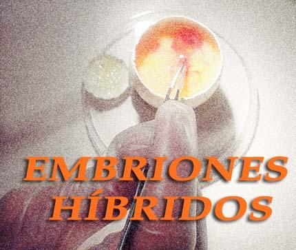Legal status of human-animal hybrid embryos