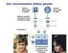 Homosexualidad defendida por importante revista bioética