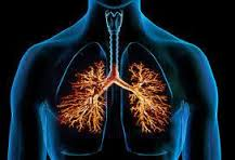 have been developed to derive various types of lung cells from iPS