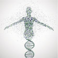 El impulso genético o gene drive consiste en dirigir la herencia sesgada de genes particulares para alterar a poblaciones enteras.