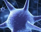 Las células iPS humanas (hiPS) son molecular y funcionalmente equivalentes a las  embrionarias humanas