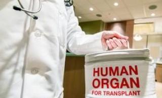 Descripción biolegislativa y valoración biojurídica del Real Decreto de trasplante de órganos en España