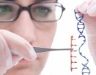 Genome editing. Human embryos modified for the second time