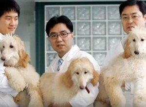 cloning dogs