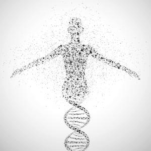 Nuevos conocimientos sobre el ADN mitocondrial parecen desaconsejar su modificación