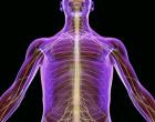 Las células madre del propio paciente parecen útiles para tratar lesiones de médula espinal