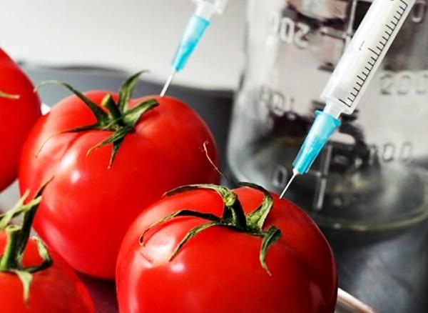 Afirman que la ingeniería genética en la agricultura europea permitió incrementar la producción de los cultivos europeos hasta un 74% en los últimos 15 años.