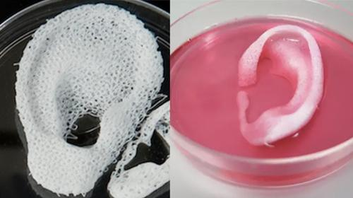 Tissues and organs production with 3D technique. the clinical use of these organs is without doubt a hope, albeit still distant
