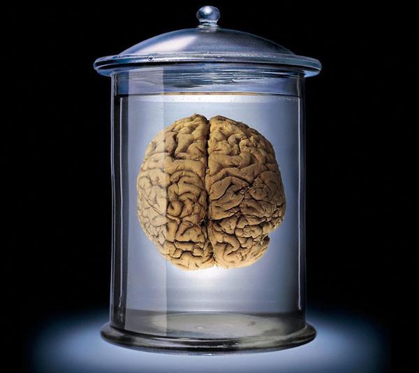 Cerebros, un grupo de investigadores en California, ha producido minicerebros de tres dimensiones a partir de células madre embrionarias humanas.