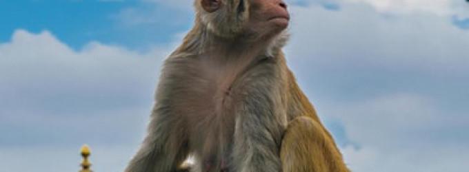 Nuevas especies artificiales, ¿podría afectar a la biodiversidad?