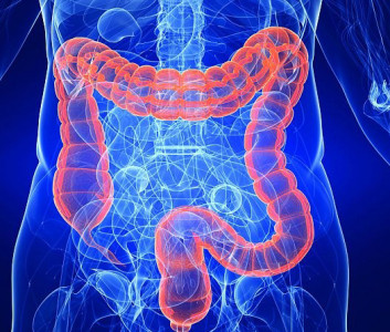 Se consigue producir un intestino funcionante