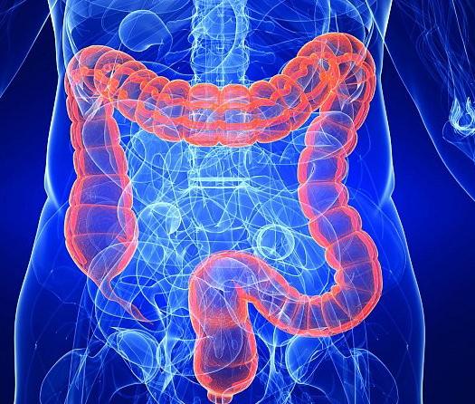 Intestinos, se consigue producirlos a partir de células madre humanas para el estudio de enfermedades, entre otras aplicaciones.