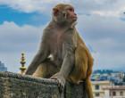 Nuevas especies artificiales, ¿podrían afectar a la biodiversidad?