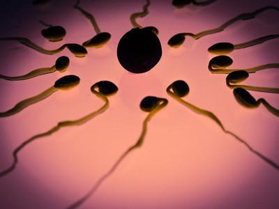 La calidad del esperma de los occidentales ha bajado a la mitad en 40 años