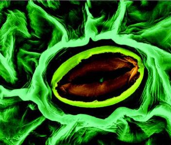 Se crean organoides artificiales generados a partir de células cancerosas
