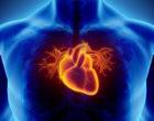 Se consigue desarrollar células del músculo cardíaco a partir de células iPS