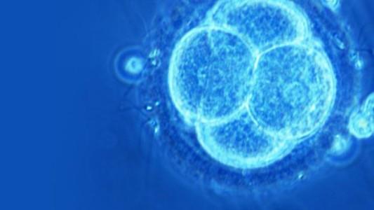Se derivan células de distintos tejidos  a partir de células madre intestinales