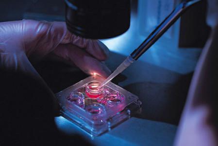 Los abortos eugenésicos tras diagnóstico genético preimplantacional siguen aumentando en España
