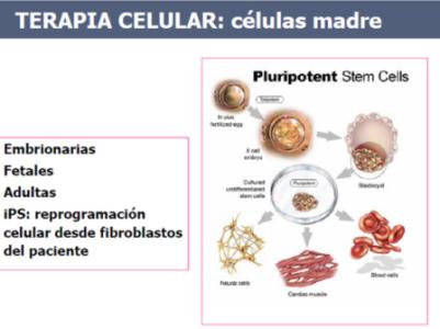 Terapia celular con células pluripotentes. Situación actual