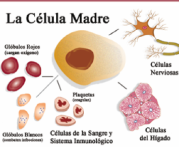 ¿Fabricar vida? Diálogo Ciencia y Fe – Clonación y células madre