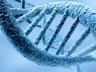 Diagnostico genetico preimplantacional no está regulado en EE.UU.