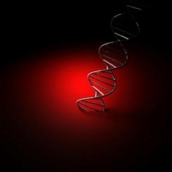 Biología sintética, síntesis de una versión modificada del único cromosoma del mycoplasma genitalium usando sustancias químicas en busca del genoma mínimo