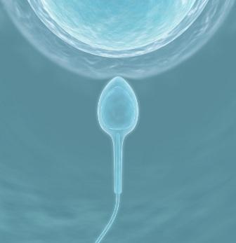 Los donantes de esperma en Reino Unido disminuyeron drásticamente por la ley que obligan a identificarse a estos en atención al derecho del niño