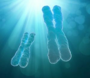 A human chromosome - scientific illustration