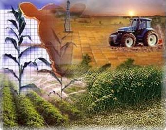 Según la Organización de las Naciones Unidas para la Agricultura y la Alimentación, la tasa de producción mundial de alimentos supera la del crLa producción mundial de alimentos supera la tasa de crecimento de la población mundial. Las espectiva es que siga disminuyendo el hambre