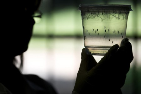 El virus del Zika. Sus medios de propagación y sus efectos sobre el feto se siguen investigando