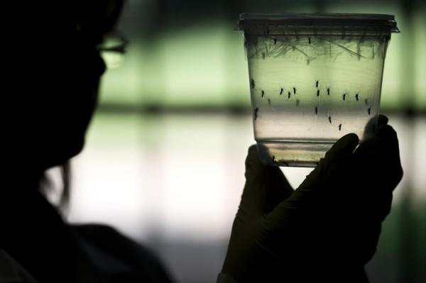 OMS no ha podido demostrar la relación entre el virus del ZiKa y la microcefalia en recién nacidos asi como su eventual transmisción por via sexual