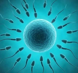 Fecundación: Más cerca de comprender las entrañas de este asombroso proceso