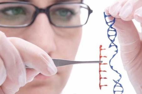 Edición genética. Se modifican embriones humanos por segunda vez