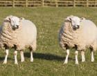 Clonación animal. Se pone en marcha un gran centro en China