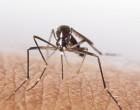 Zika y microcefalia. Su relación debe ser establecida con precaución