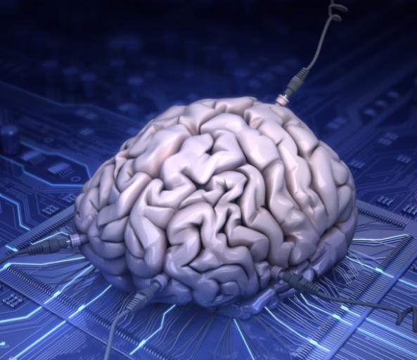 Se pretende producir artificialmente mini cerebros