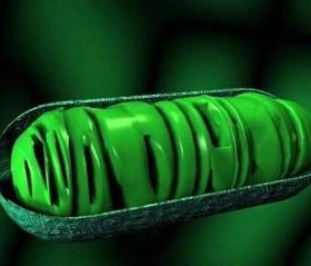 Sorpresas mitocondriales