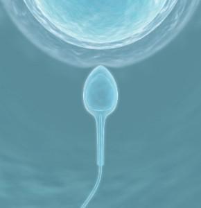 Obtención de óvulos funcionales a partir de piel de ratón por primera vez