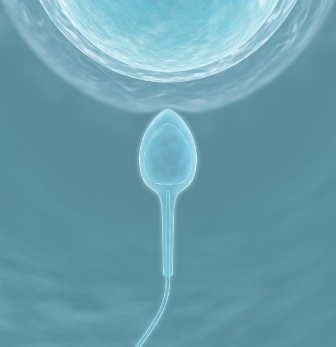 Obtención de óvulos funcionales de piel que si el protocolo funciona podría abrir las puertas a la producción de gametos a partir de piel en humanos.