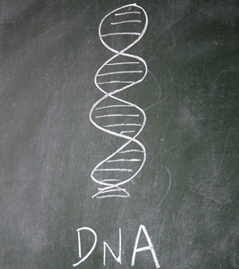 DNA shutterstock_88160692