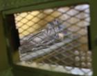 Los profesionales sanitarios de Estados Unidos se resisten a participar en las ejecuciones