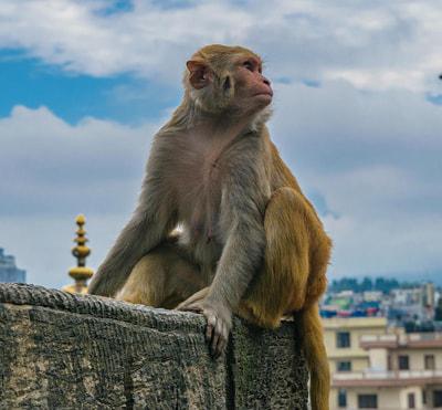 Nuevas especies artificiales. Un artículo publicado en el blog Practical Ethics expone que la biodiversidad global se ha visto profundamente afectada.