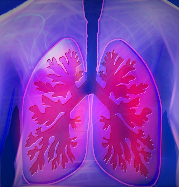 Organoides pulmonares células iPS. Se producen organoides pulmonares a partir de células madre humanas pluripotentes (iPS)