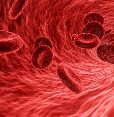 Enfermedades de la sangre. Primer paso importante para tratarlas a partir de células adultas y evitar trasfusiones repetidas.