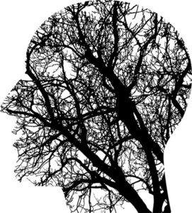 Nuevas experiencias con cerebros avivan el debate bioético