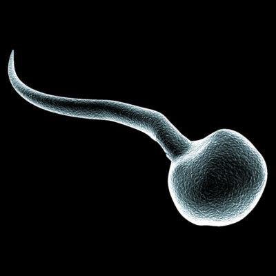 Se producen espermatozoides a partir de células madre testiculares