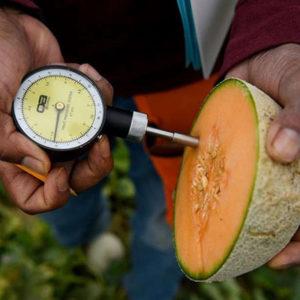 La justicia europea pone trabas a la edición genética en plantas