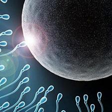 Los ovocitos podrían tener el poder de seleccionar al espermatozoide que los fecunde