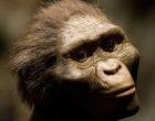 Hace 2.6 millones de años los homininos ya fabricaban utensilios de piedra