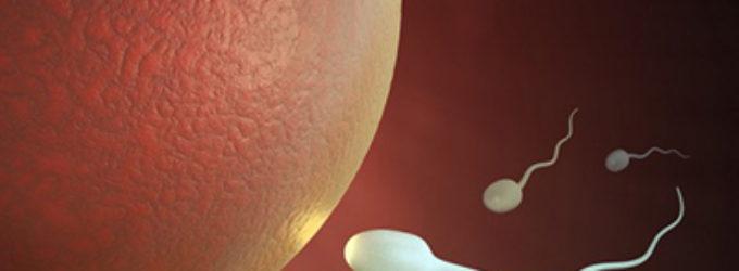 Más datos sobre el proceso de fertilización humana